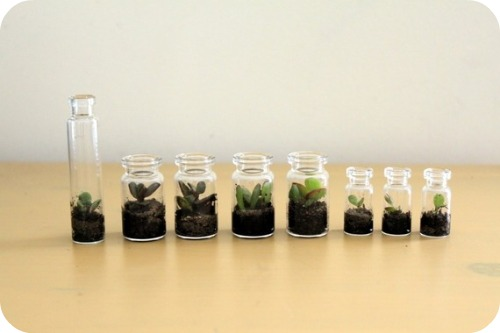 Terrarium Centerpieces Defined Design